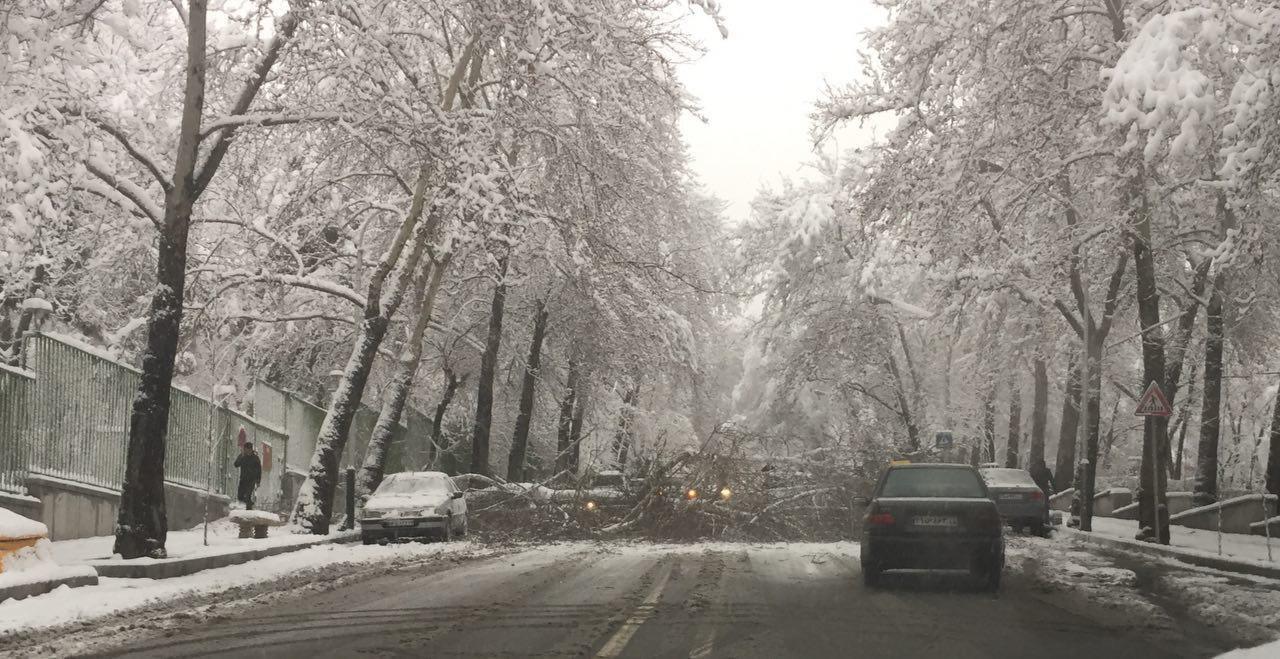 سقوط درخت خیابان نیاوران+ عکس