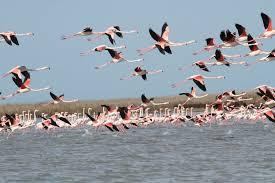 از خرید پرندگان شکاری و مهاجر، جداً خودداری کنید