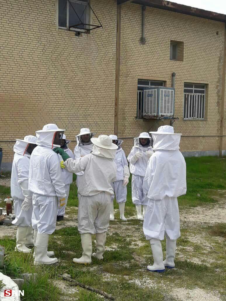بماند///// زنبور عسل میتواند بحران بیکاری دانشجویان دامپزشکی را حل کند/ فقدان مدرسین مسلط به صنعت زنبورداری