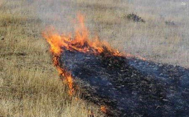 ۲۶۰ هکتار از جنگل های ارسباران در آتش سوخت