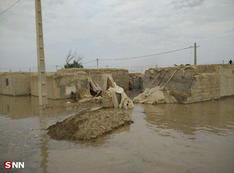 چرا سر و کله مارهای سمی در منطقه سیستان پیدا شد؟/ وقتی عرصه زندگی با آمدن سیلاب برای مارها تنگ شد