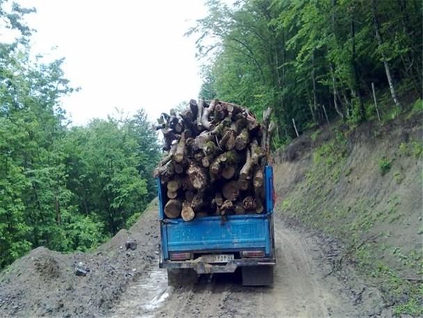مسئولین مازندارن در حوزه جنگلها  هیچ کاری از دستشان برنمیآید / پیرامون بحث بیکاری ۳۵۰۰ کارگر در مازندران تیم تخصصی تشکیل دادهایم