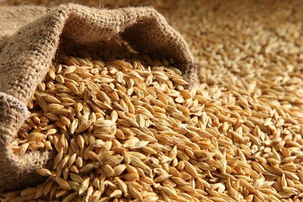 دولت واردات گندم را فعلاً متوقف کرده است