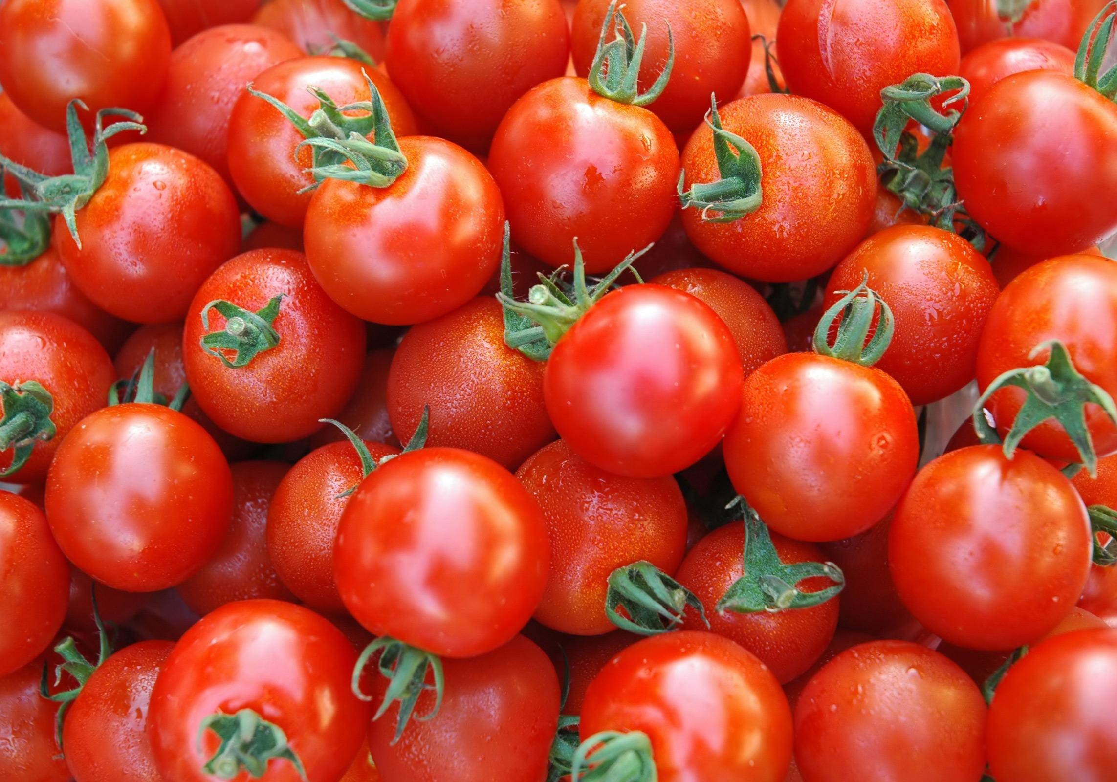 قول کاهش قیمت گوجهفرنگی در روزهای آینده