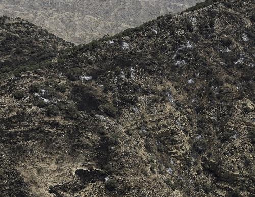 تراژدی غم انگیز برای زاگرس/ محاصره گونههای گیاهی و جانوری در میان حلقههای آتش