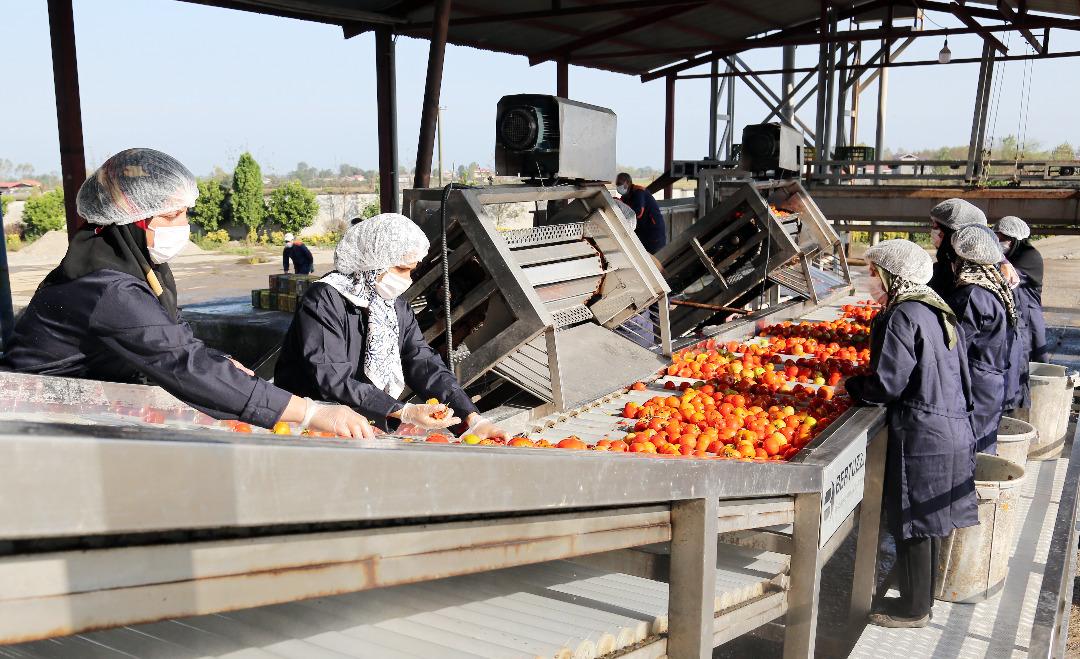 1209724 376 » مجله اینترنتی کوشا » راهاندازی اولین اورژانس محصولات کشاورزی به همت بنیاد برکت 1