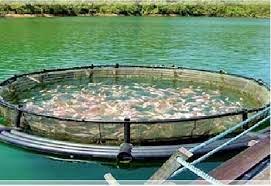 تولید بیش از ۳۰۰ تن در مجموعه پرورش ماهی دنا با حمایت دستگاه قضایی
