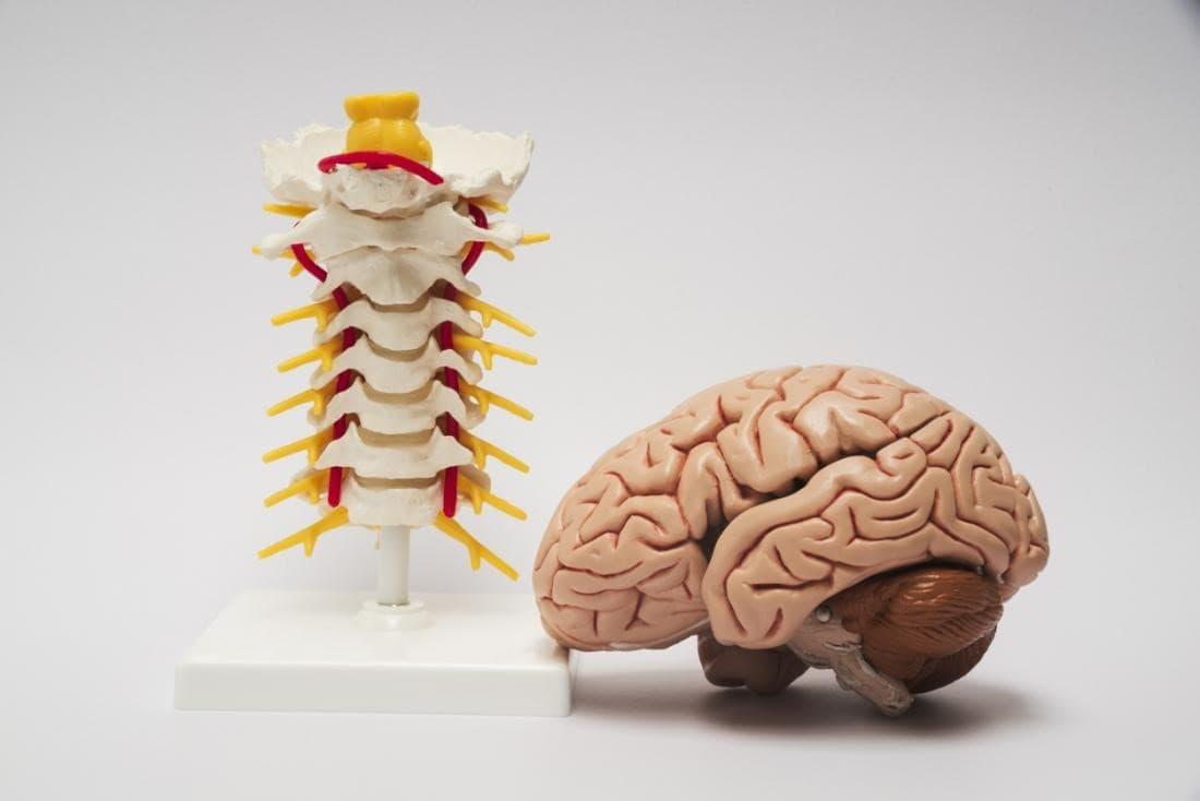 مسابقه ملی دانش مغز پایان یافت / معرفی برگزیدگان به رقابت جهانی دانش مغز آمریکا